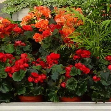 Gartencenter siemes lebende pflanzen for Balkon teich fische