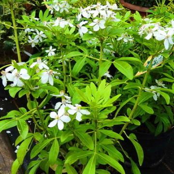 Gartencenter Siemes - Lebende Pflanzen